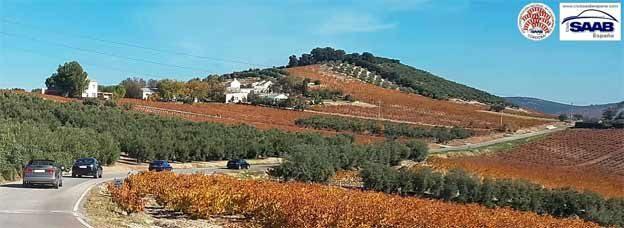 Saab visit to Cordoba winery