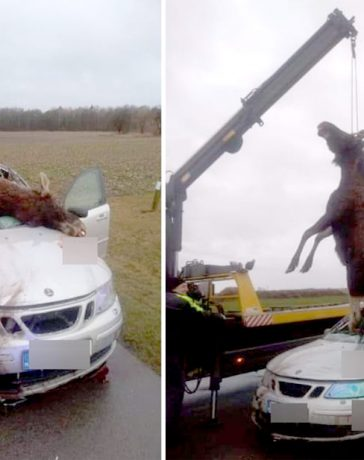 Saab Moose collided