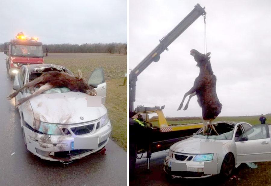 Saab Moose collided