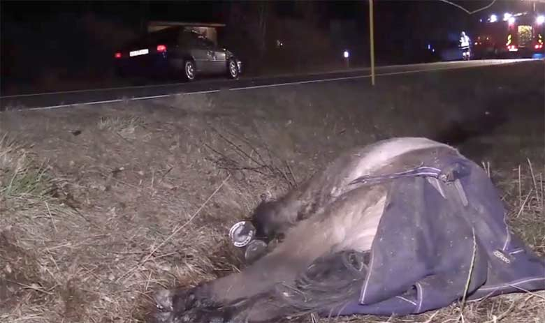 Tragedy on the roads as loose Pony dies after being hit by car