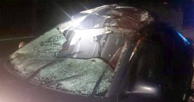 Saab crashed in a moose